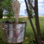 DIY Garden Markers (AKA Plant Tombstones).