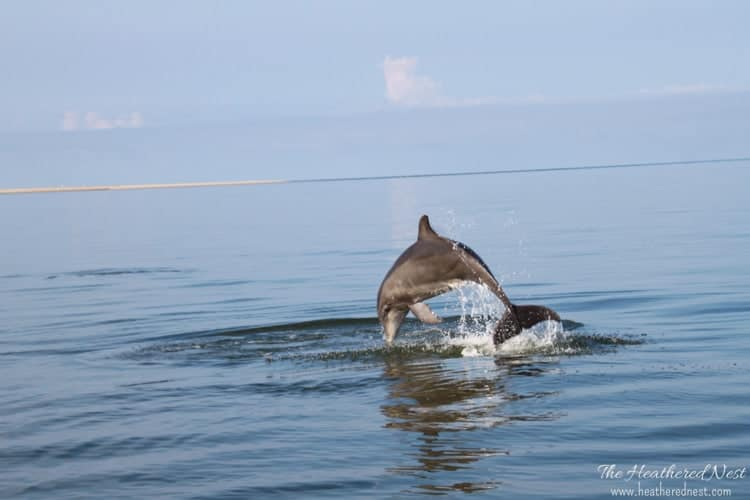 Summer garden and house tour from www.heatherednest.com cape cod bottlenose dolphin jumping