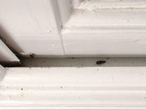 Insects coming in through cracks and gaps in those old, outdated windows? Time for window replacement. This post from heatherednest.com talks all about the ins and outs of vinyl window replacement.