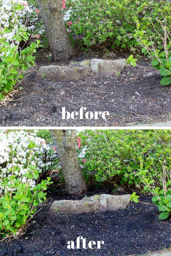 Ever heard of mulch dye, or mulch paint? YES, it's a thing! Here's our review and why you'll want to try this DIY gardening idea this spring! #mulch #mulchalternative #mulchtips #mulchdiy #mulchDIY #mulchpaint