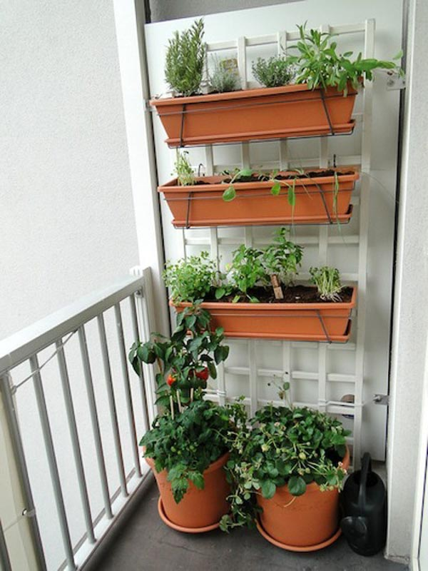 A balcony vertical garden with plastic terra cotta trough planters attached to a white lattice
