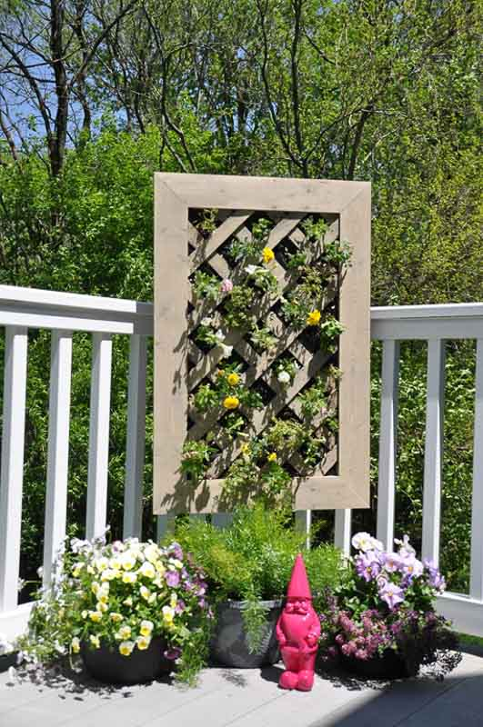 DIY framed lattice vertical planter tutorial. Seen here attached to the side of a deck and planted with colorful annuals