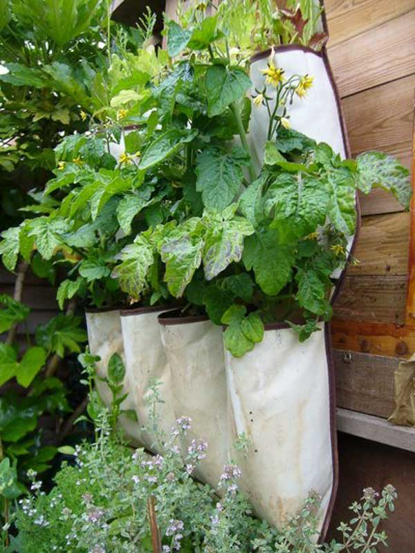 A popular and inexpensive type of vertical garden to try...use a hanging shoe organizer to plant in!