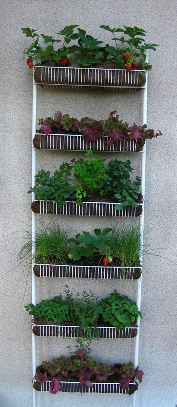 A great repurposing idea for a wire shower caddy or spice rack - make a DIY vertical garden, like this one seen used as a kitchen herb and strawberry garden