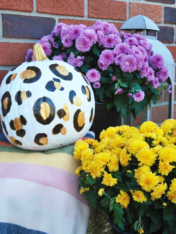 51 Cute Painted Pumpkin Ideas - Effortless Style Leopard Painted Pumpkins