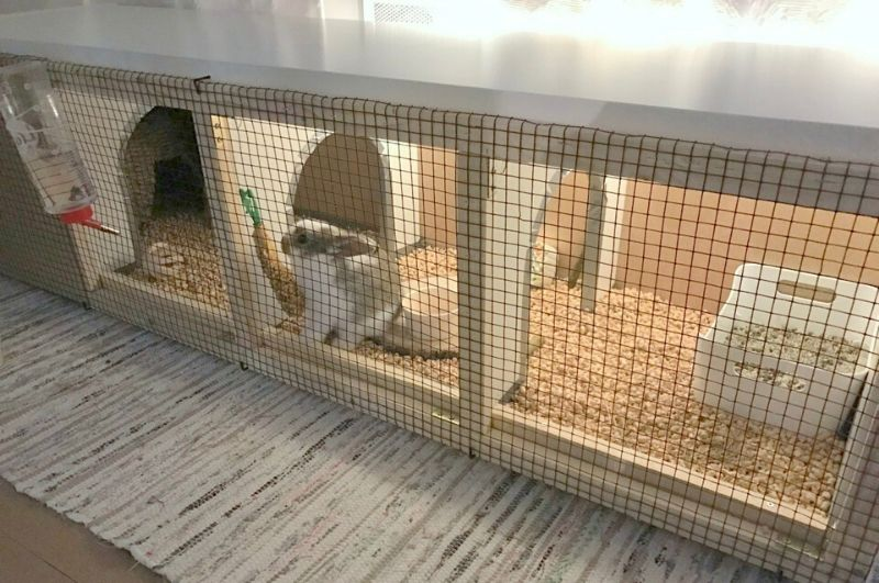 small animal hutch Ikea hack