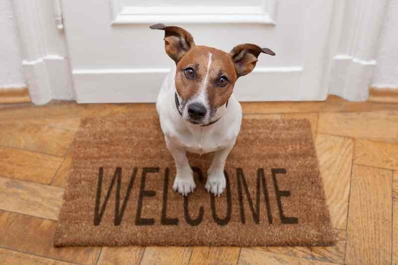 10 reasons your home won't sell - pets