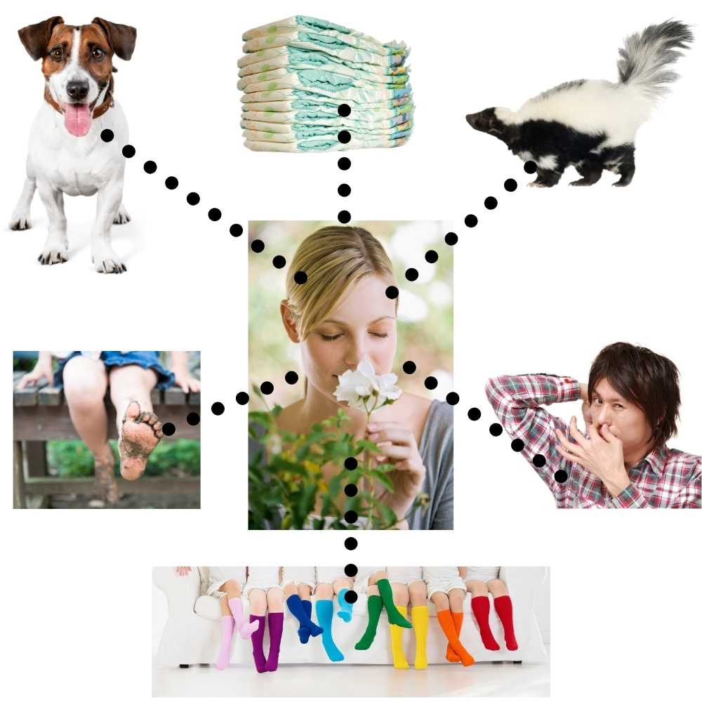 woman in center smelling flowers surrounded by things that don't smell so great...a skunk, dog, muddy feet, socks, stinky armpit, diapers